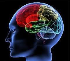 成功脳.jpg